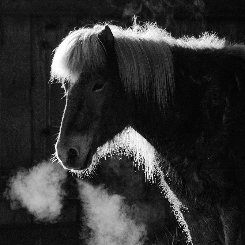 Horse Photograph - Horse In Black And White Square Format by Matthias Hauser