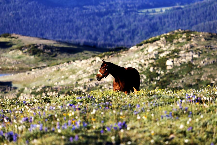 Horse Photograph - Horse In Mountain Wildflowers by Rebecca Adams