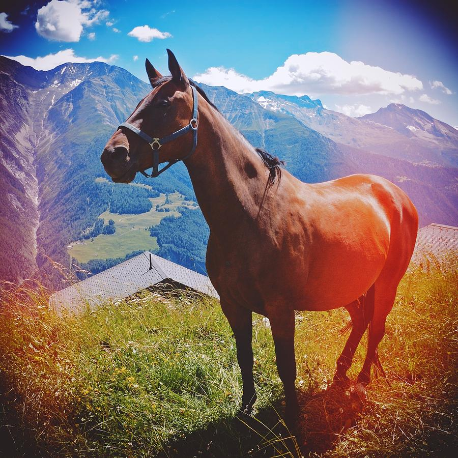 Horse Photograph - Horse in the alps by Matthias Hauser