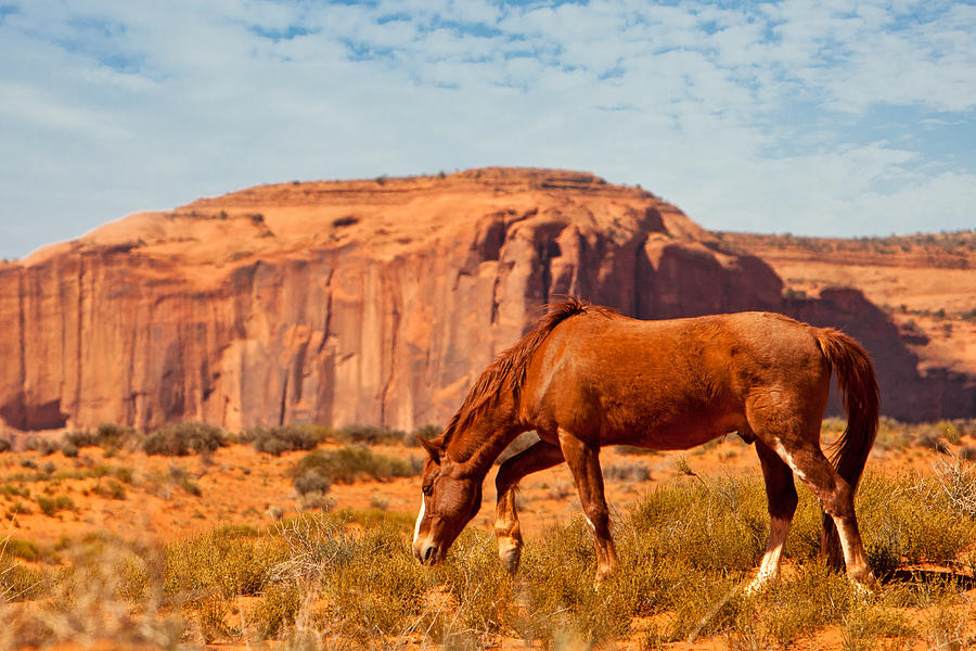 Monument Photograph - Horse In The Desert by Susan Schmitz