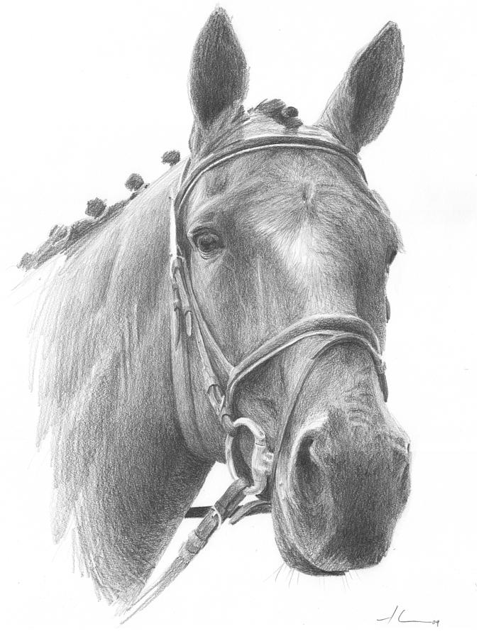 Horse Knotted Mane Pencil Portrait Drawing by Mike Theuer