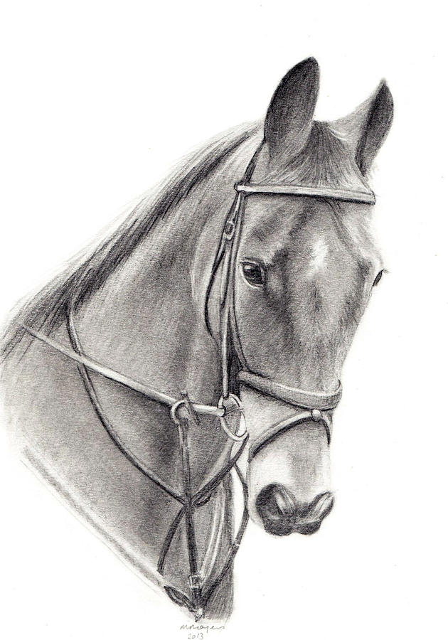 Horse Drawing - Horse by Mary Mayes