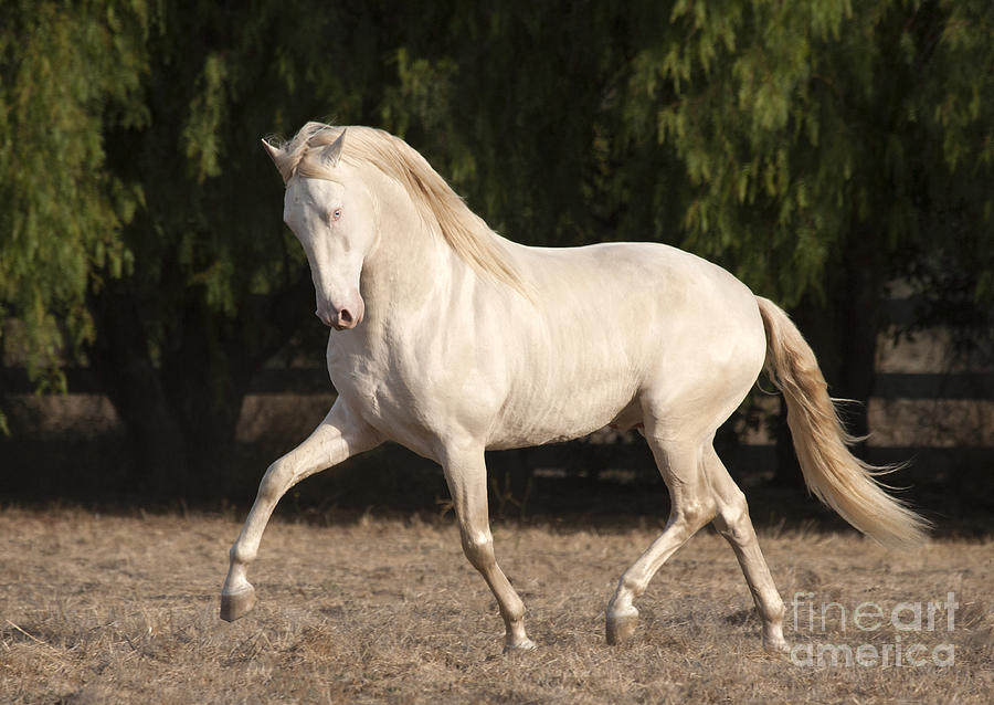 Horse Of Palest Gold Photograph By Carol Walker