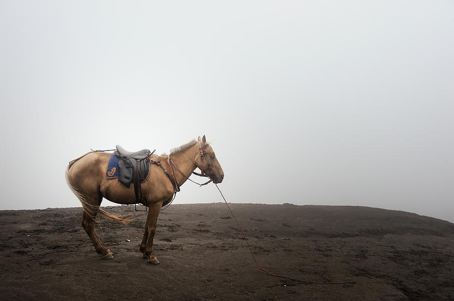 Horse On A Mountain On A Foggy Day Photograph by Carlina Teteris