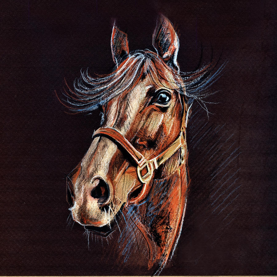 Horse Smile Drawing - Horse Portrait  by Daliana Pacuraru