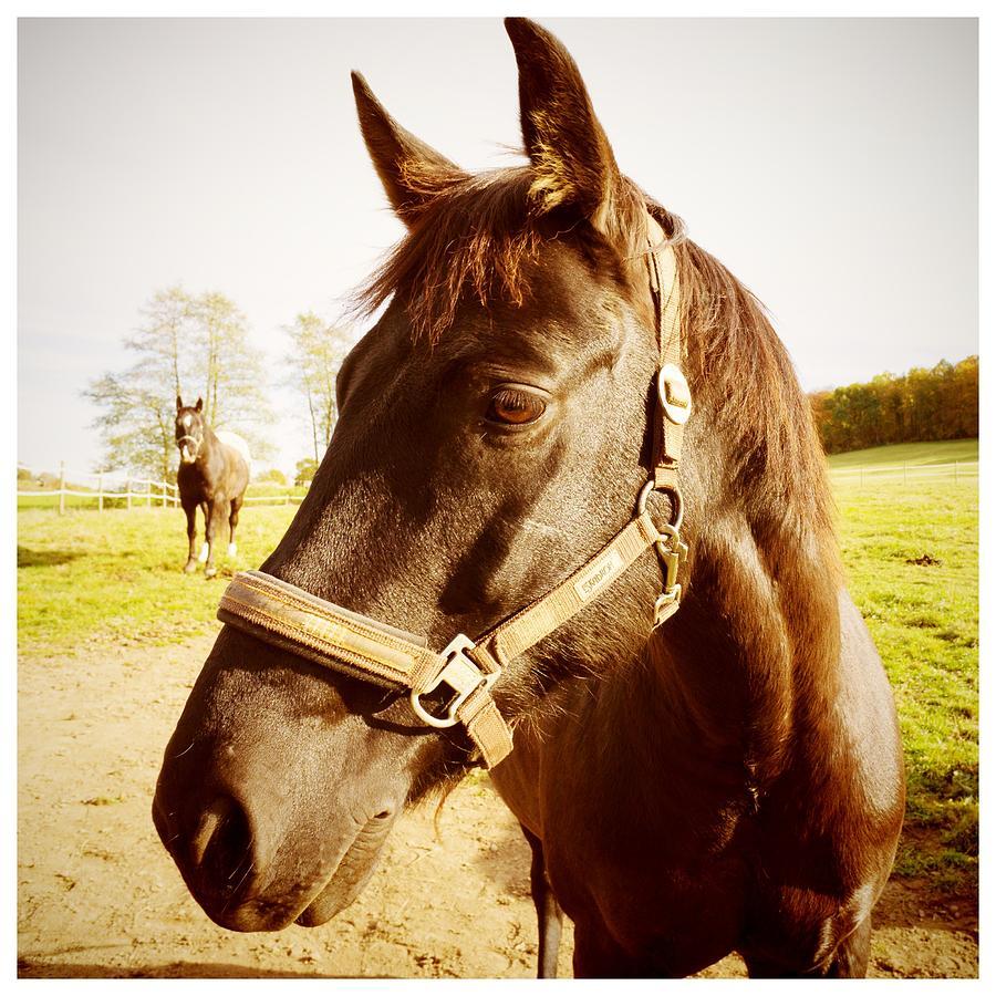 Horse Photograph - Horse portrait by Matthias Hauser