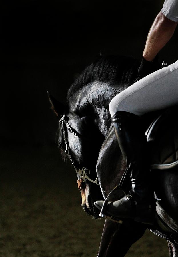 Horse Portrait Photograph by Somogyvari