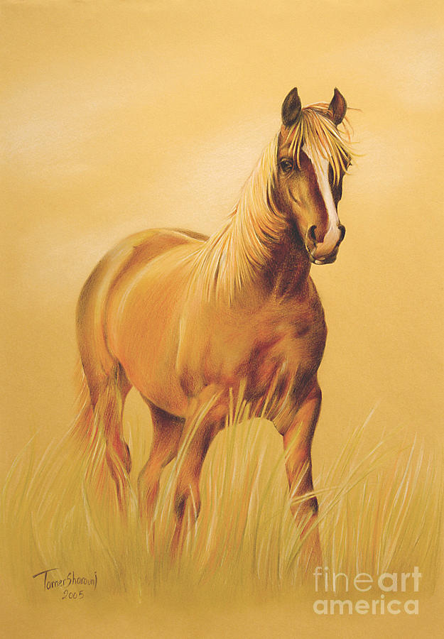 Horse Portrait Drawing by Tamer and Cindy Elsharouni