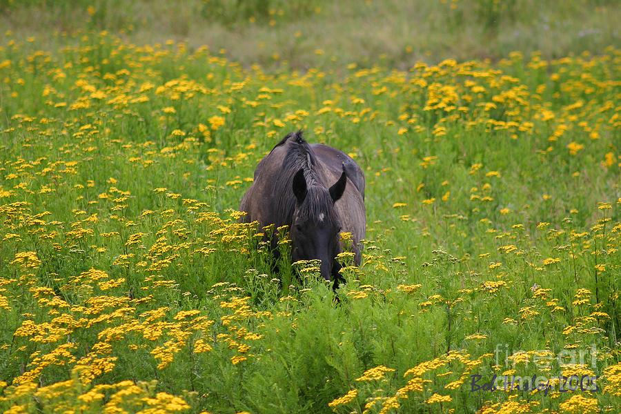 Colorado Photograph - Horse Power Flower Power by Bob Hislop