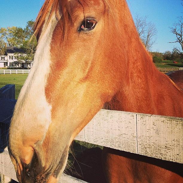 Horse Photograph - #horse #pretty #nature #wow #amazing by Amber Campanaro