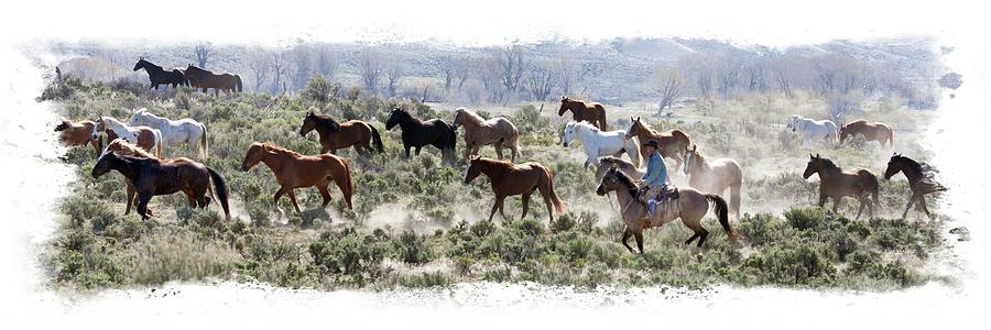 Horse Roundup by Judy Deist