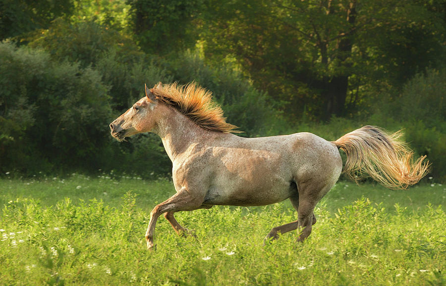 Horse Running Photograph by Betty Wiley