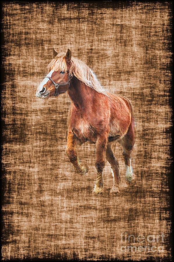 Horse Photograph - Horse Running by Dan Friend