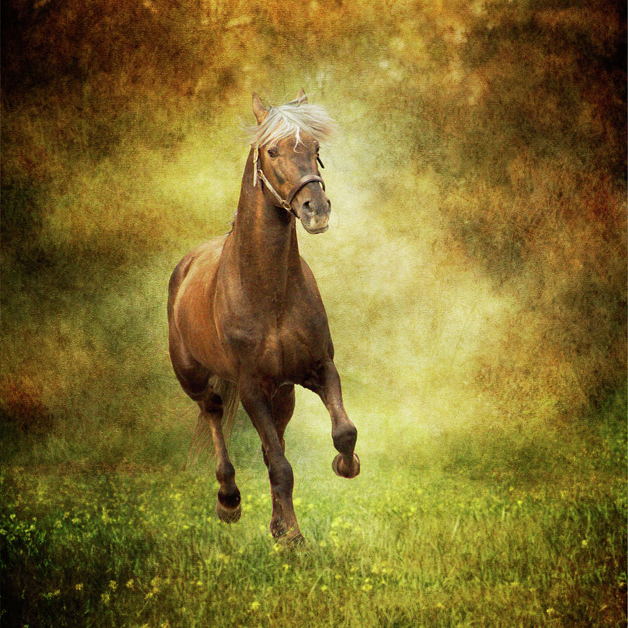 Horse Running Free In Meadow Photograph by Christiana Stawski