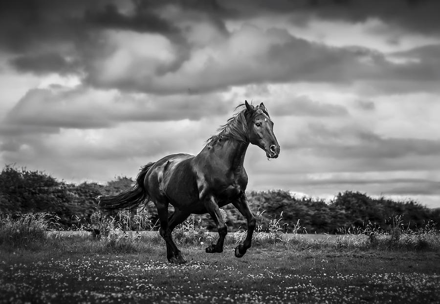 Horse Running In Field Photograph by Rory Turnbull / Eyeem