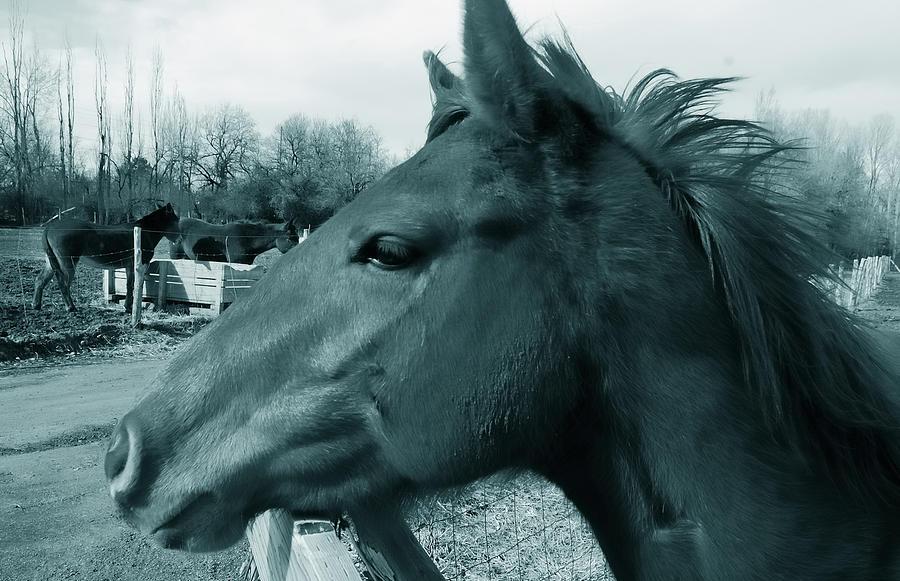 Horses Photograph - Horse Sense by Steven Milner