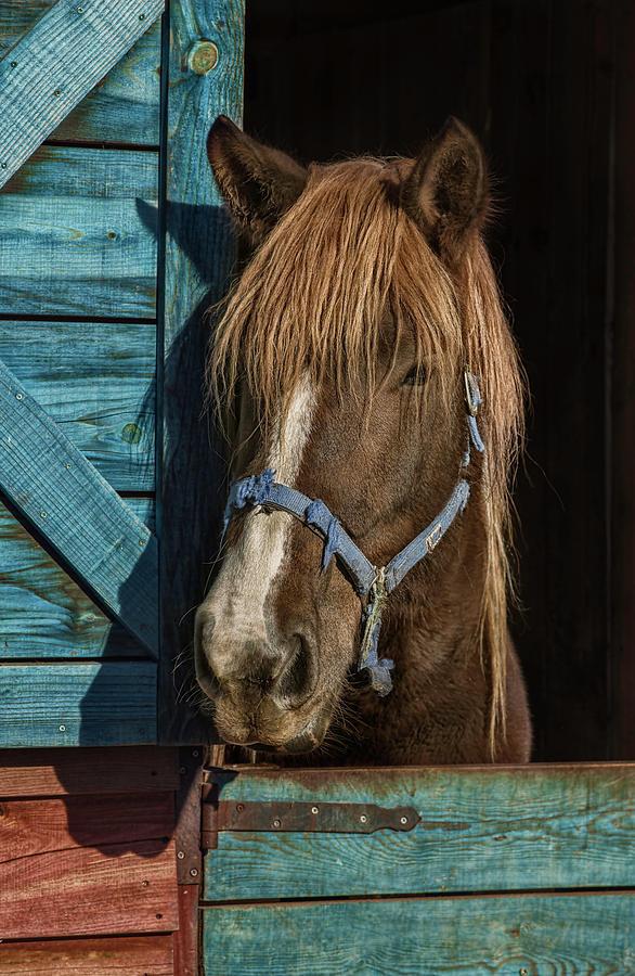 Horse Photograph by Silversaltphoto.j.senosiain