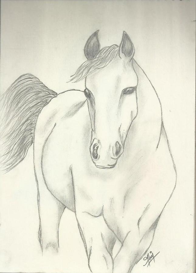 Horse Drawing - Horse Sketch by Saleem Baig