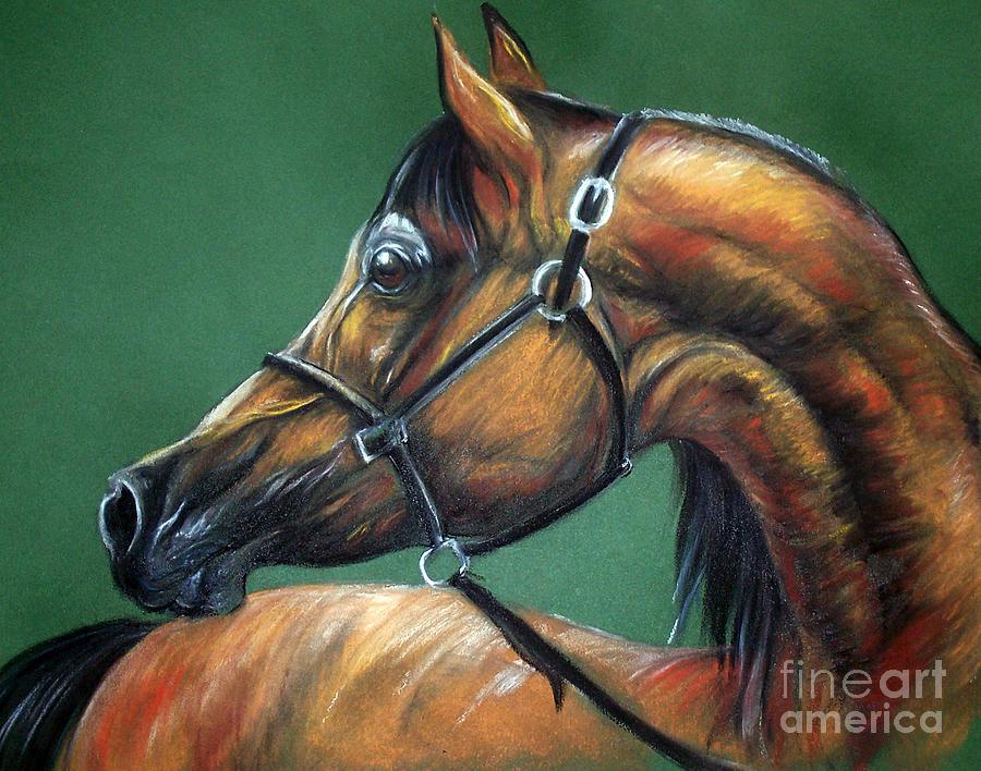 Horse Soft Pastel Drawing By Angel Tarantella