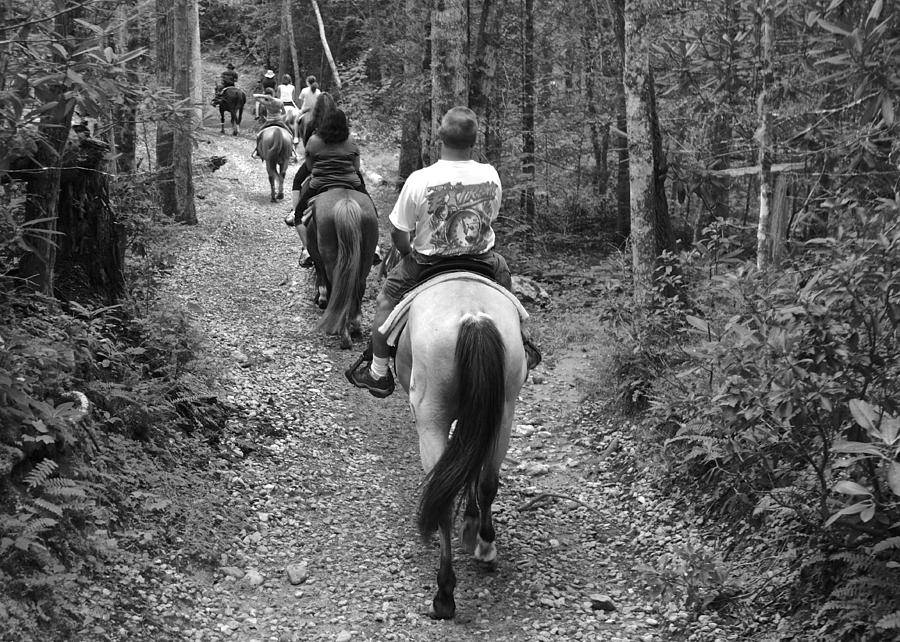 Horse Photograph - Horse Trail by Frozen in Time Fine Art Photography