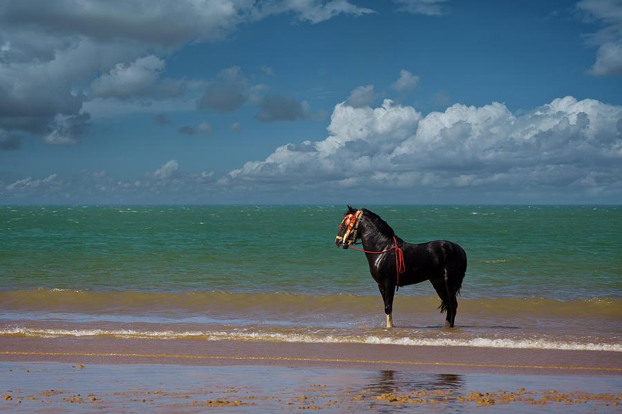 Horse Photograph by Ugurhan