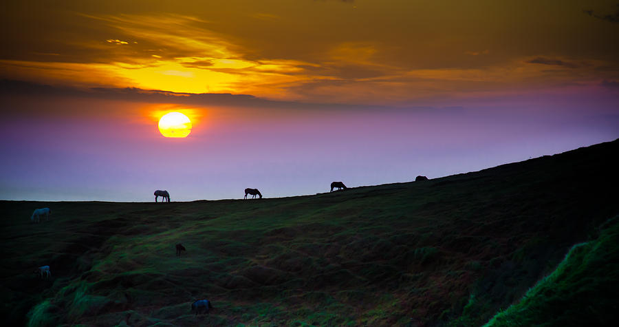 Horse Photograph - Horsed On The Purple Hillside by William Shevchuk