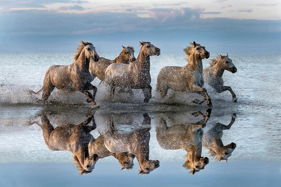 Horses Photograph - Horses And Reflection by Xavier Ortega