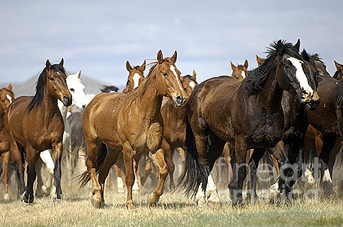 Horse Photograph - Horses-animals-2 by Wildlife Fine Art