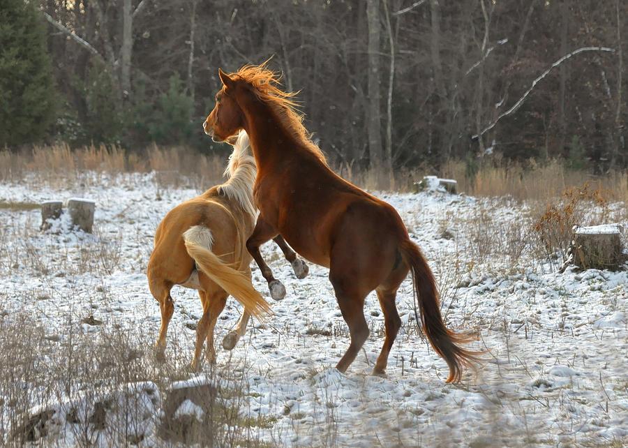 Horse Photograph - Horses At Play - 10dec5690b by Paul Lyndon Phillips