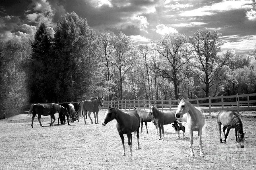 Horses black and white infrared surreal horses black white nature landscape equine photograph by kathy fornal