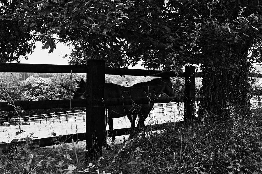 Horses Photograph - Horses By The Fence by Aidan Moran