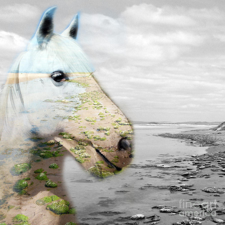 Pet Photograph - Horses Dream by Jo Collins