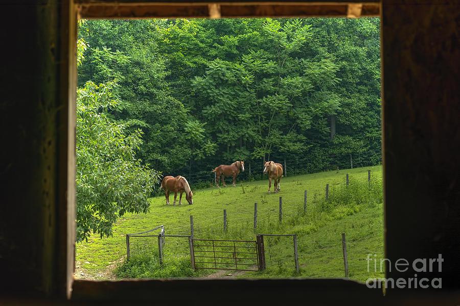 Horses Photograph - Horses Feeding In Field by Dan Friend