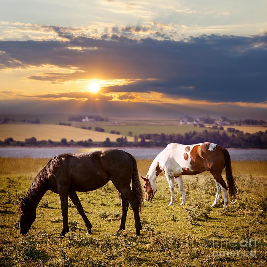 Horses Grazing At Sunset Photograph
