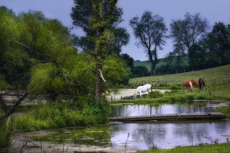 Animal Photograph - Horses Grazing At Waters Edge by Tom Mc Nemar