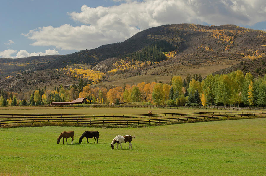 Horses Grazing In Autumn Pasture Photograph by Chapin31