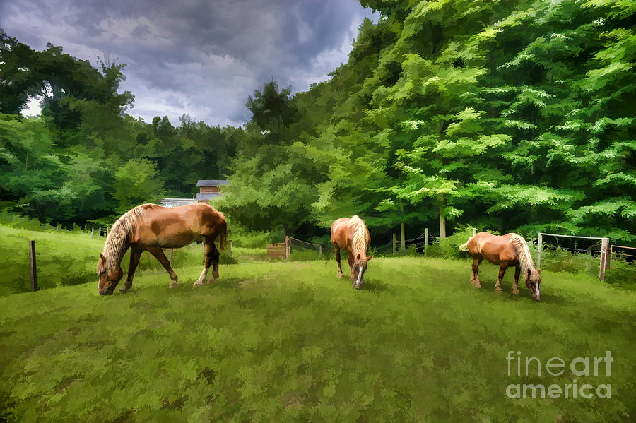Horses Photograph - Horses Grazing In Field by Dan Friend