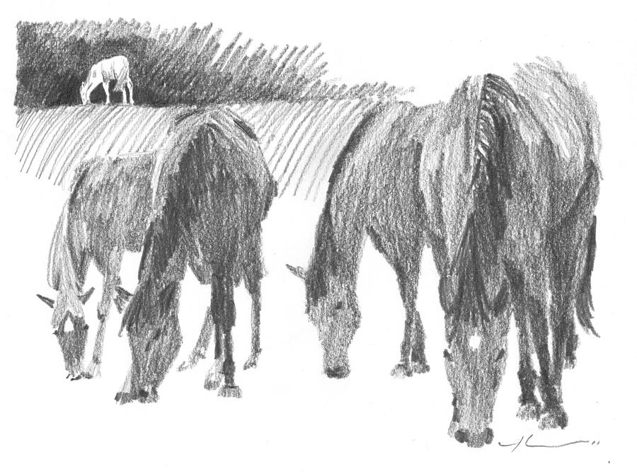 Horses Grazing Pencil Portrait Drawing by Mike Theuer