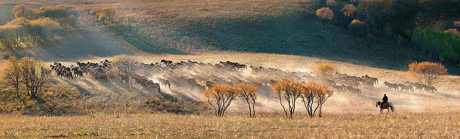 Panorama Photograph - Horses by Hua Zhu