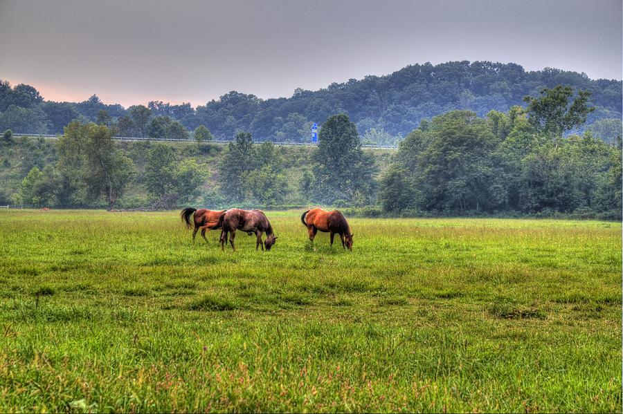 Horse Photograph - Horses In A Field 2 by Jonny D