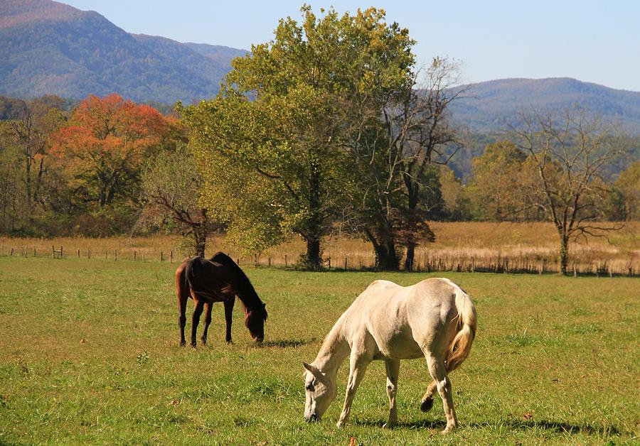 Horses In Cades Cove Photograph