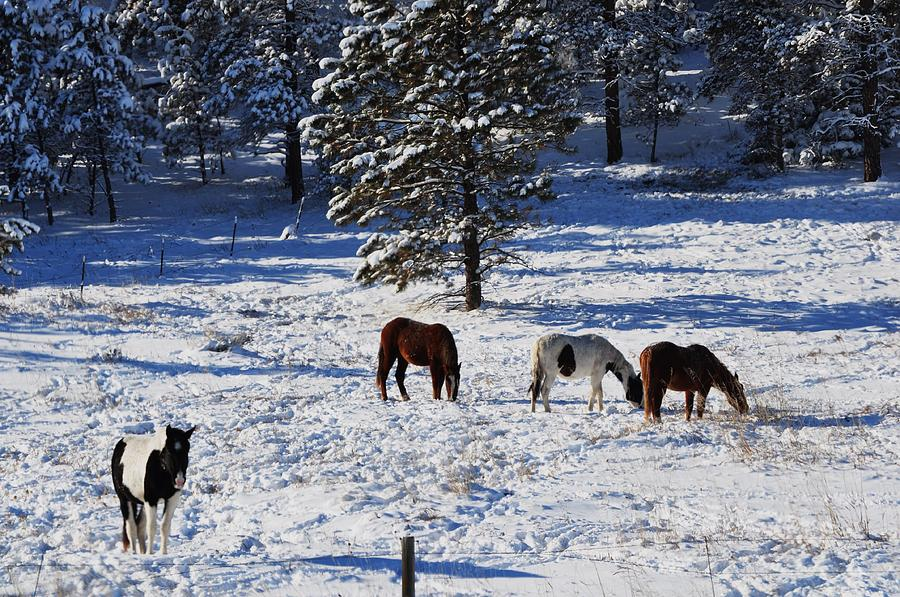 Horses in Snow by Mike Helland