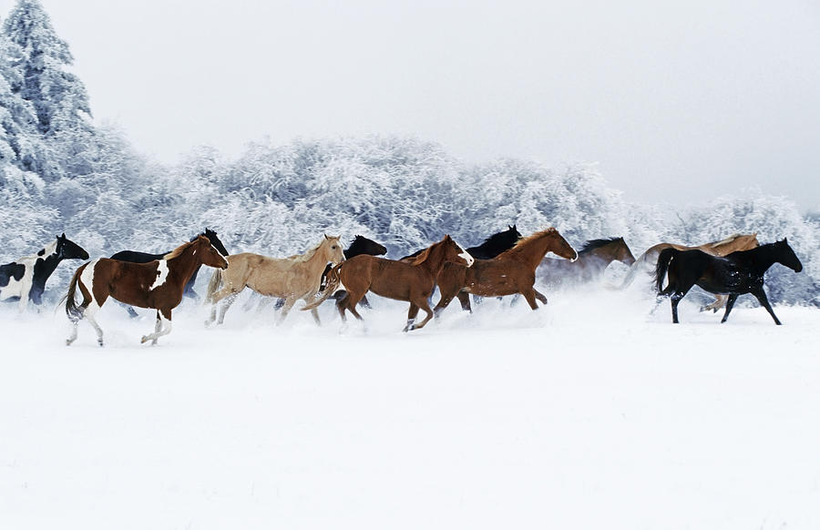 Horses In Winter Photograph By Thomas Sbampato