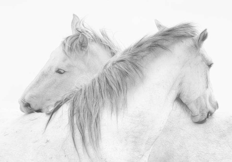 Animals Photograph - Horses by Marie-anne Stas