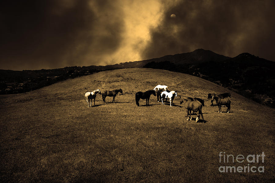 Marin Photograph - Horses Of The Moon Mill Valley California 5d22673 Sepia by Wingsdomain Art and Photography