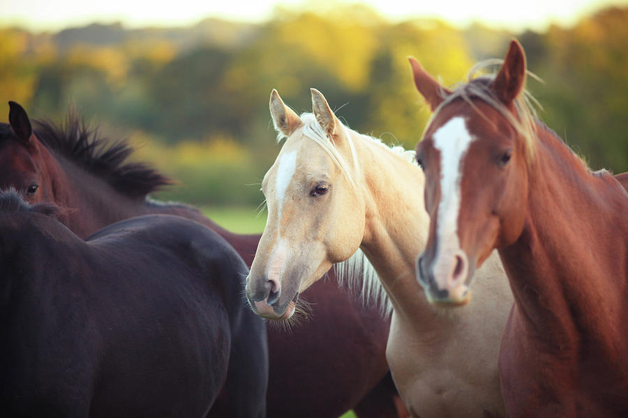 Horses Photograph by Olivia Bell Photography