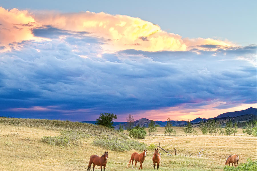 Storm Photograph - Horses On The Storm 2 by James BO  Insogna