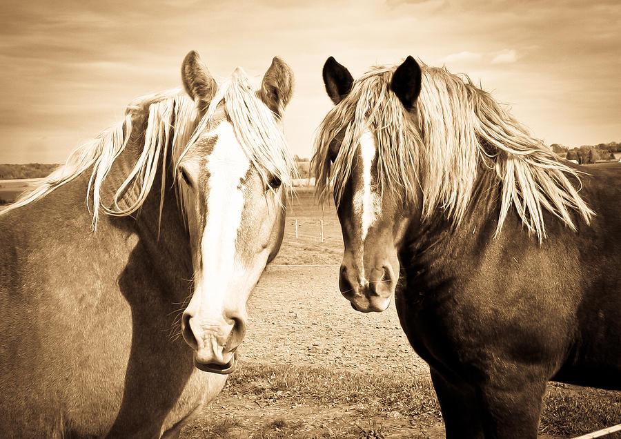 Horses Photograph - Horses  by Paulina Szajek