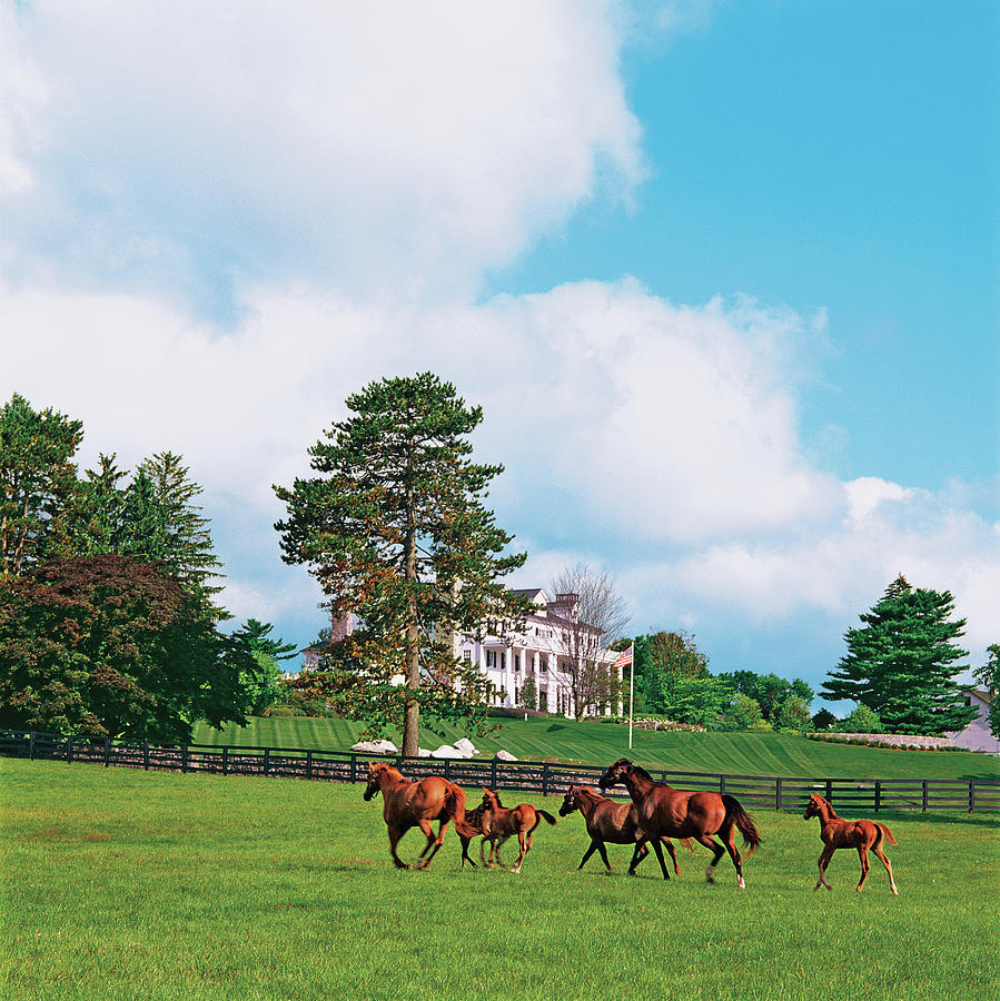 Horses Running Through Pasture Photograph by Durston Saylor