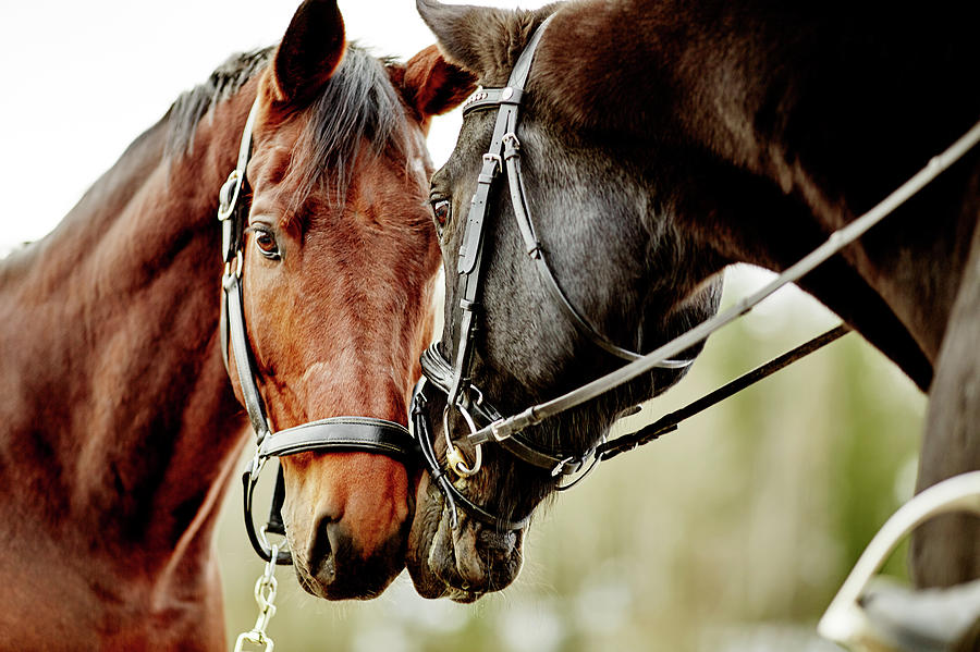 Horses Together Photograph by Johner Images